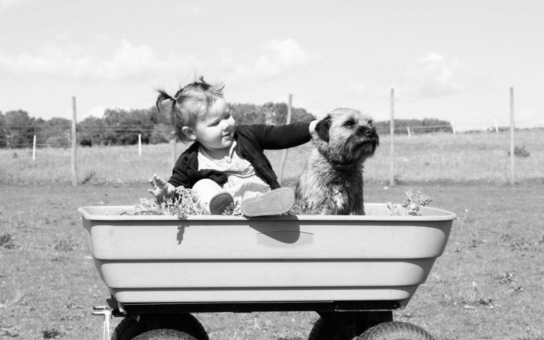 Pourquoi ne faut-il pas laver votre chien trop souvent ?
