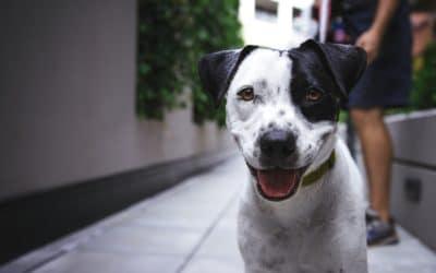 Mon chien a–t-il des puces ?