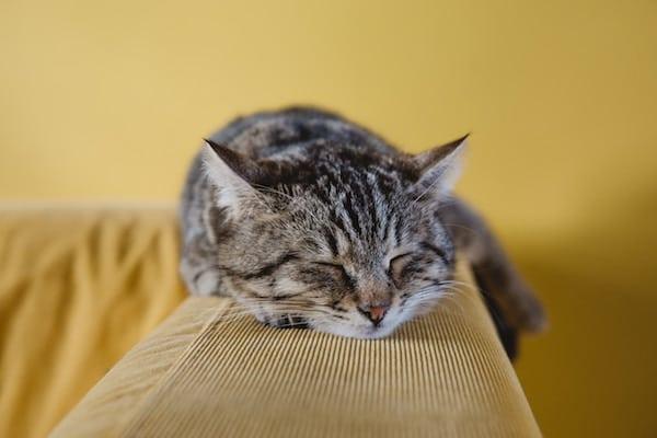 Mon chat n'utilise pas sa litière