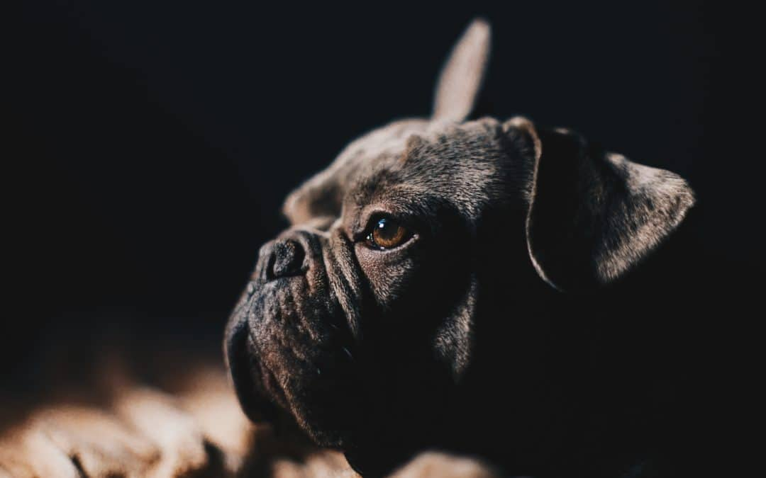Bien nourrir votre chien : 4 choses à ne pas faire