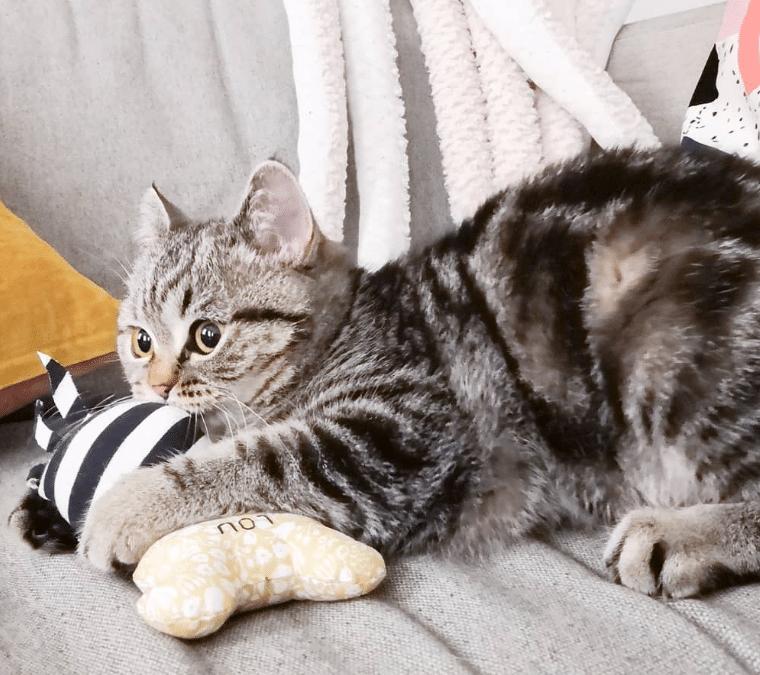 Mon chat fait ses griffes partout : Que faire ?