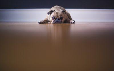 Comment punir son chien ?