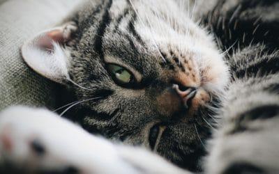 Le comportement d'un chat heureux !