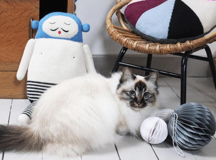 Comment réguler l'appétit de son chat?