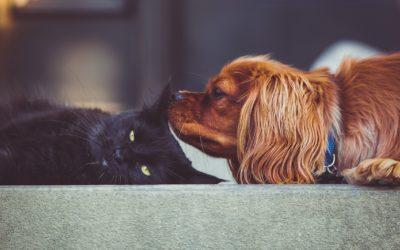 Les règles d'or pour présenter un chat à un chien