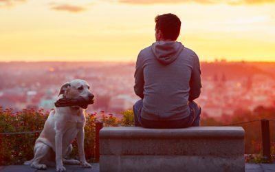 Apprendre l'ordre «assis» à son chien