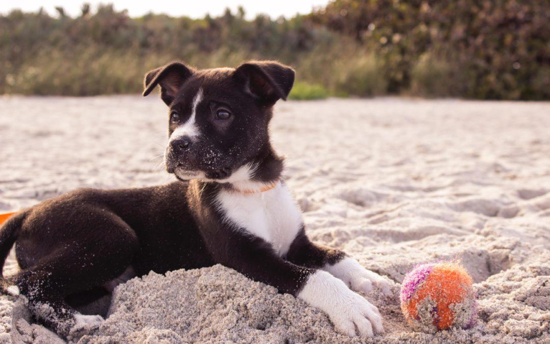 Mon chien risque t'il une maladie héréditaire ?