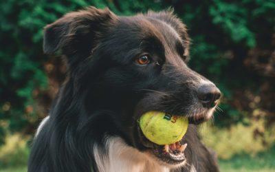 Sports canins: 3 questions que vous vous posez.