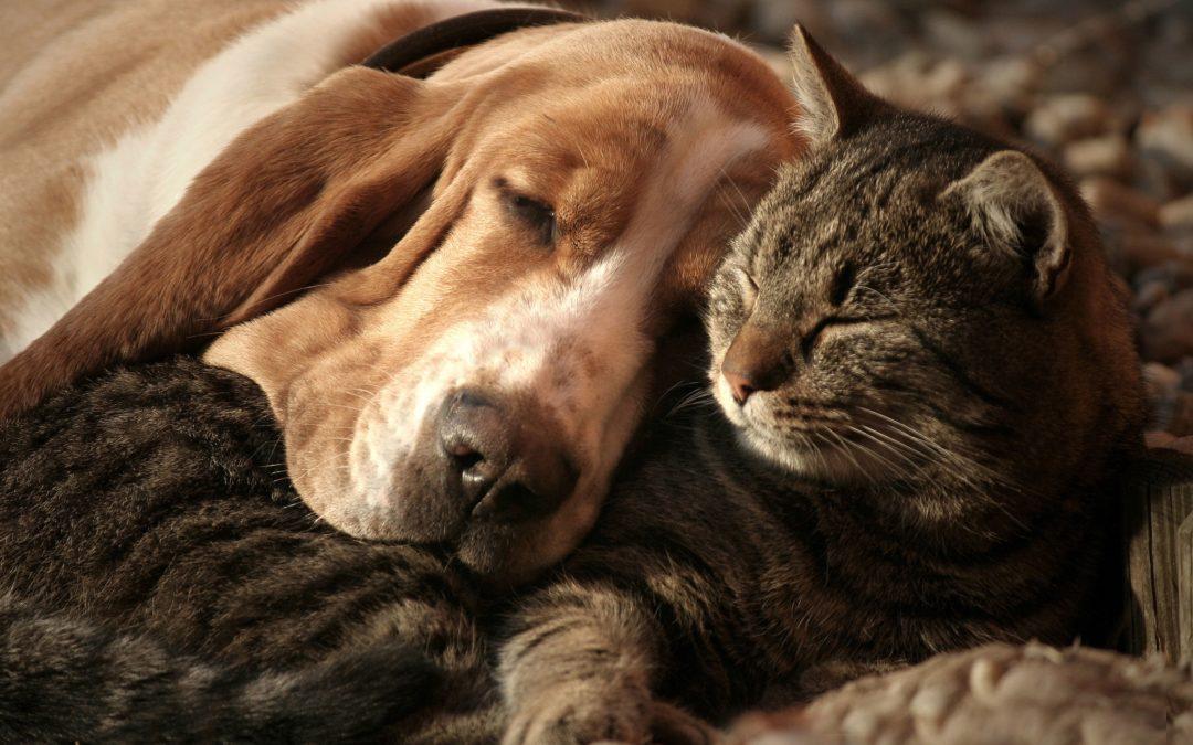 L'origine des conflits entre chien et chat