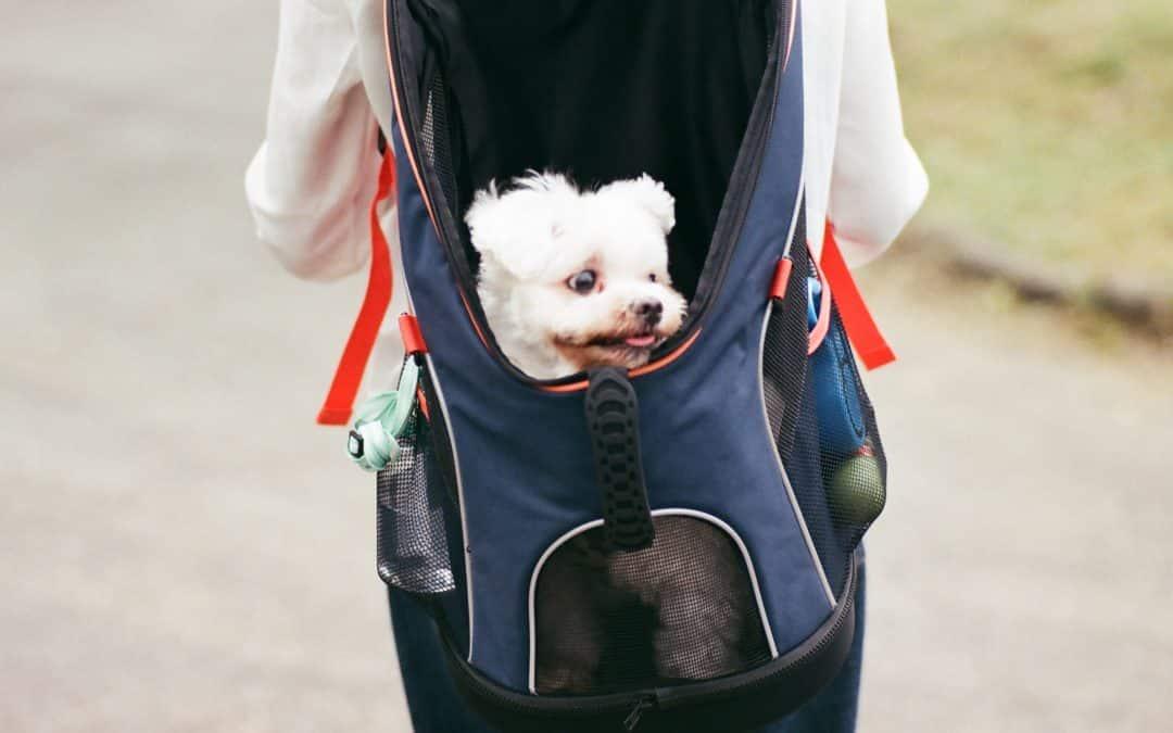 Avez vous besoin d'un sac à dos pour chien?