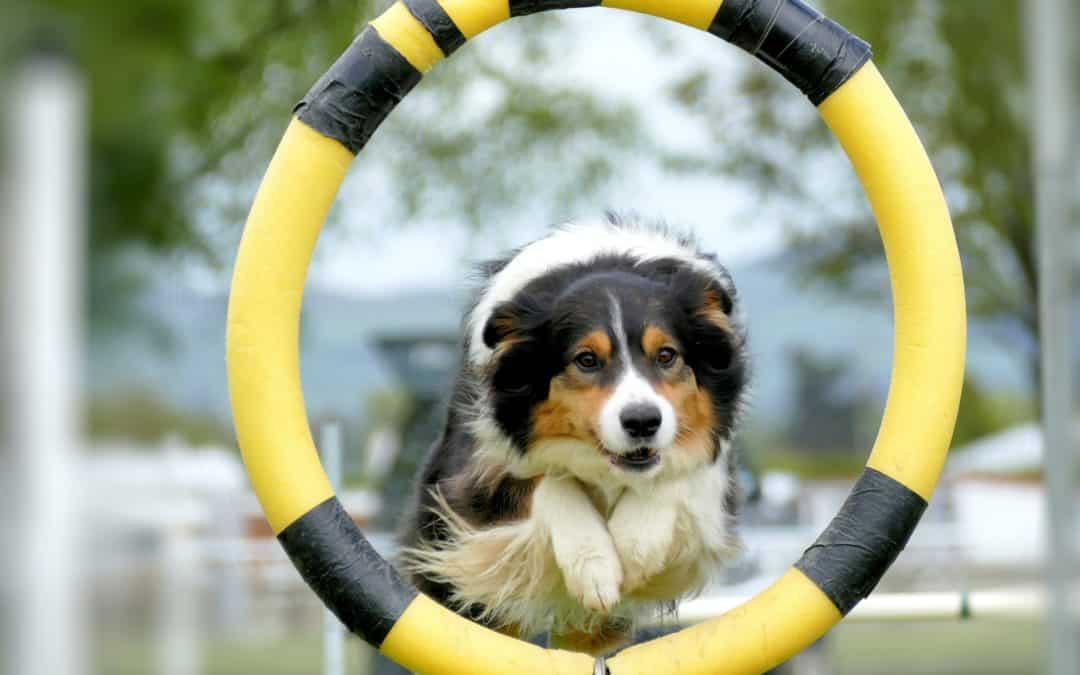Les 5 sports pour chien les plus pratiqués