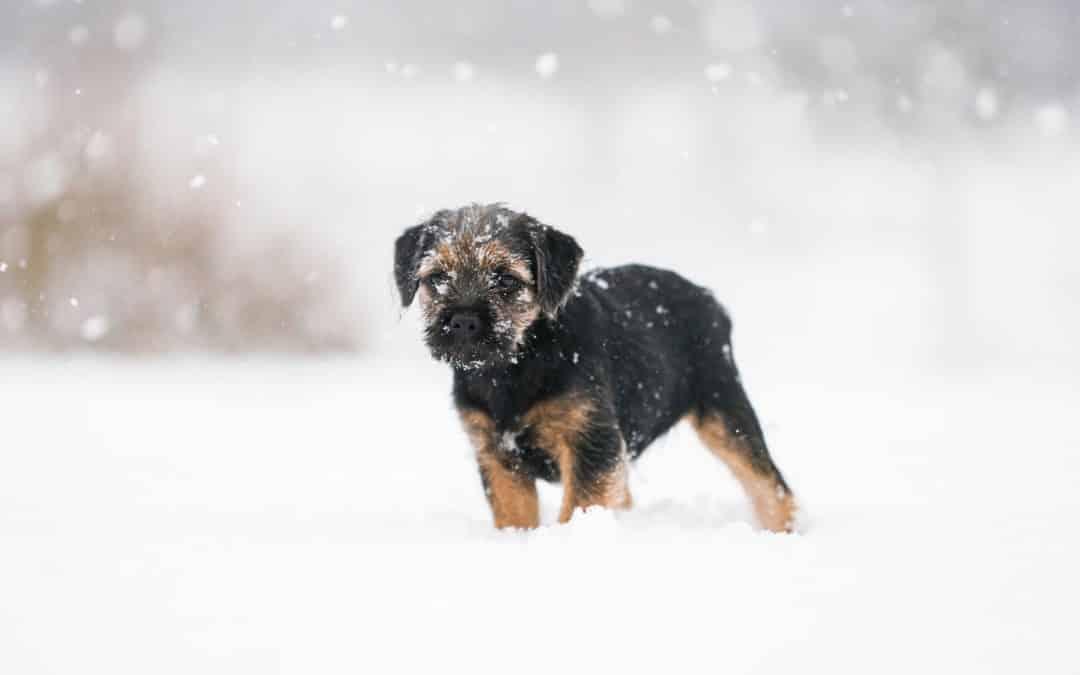 Aidez votre chien à affronter l'hiver