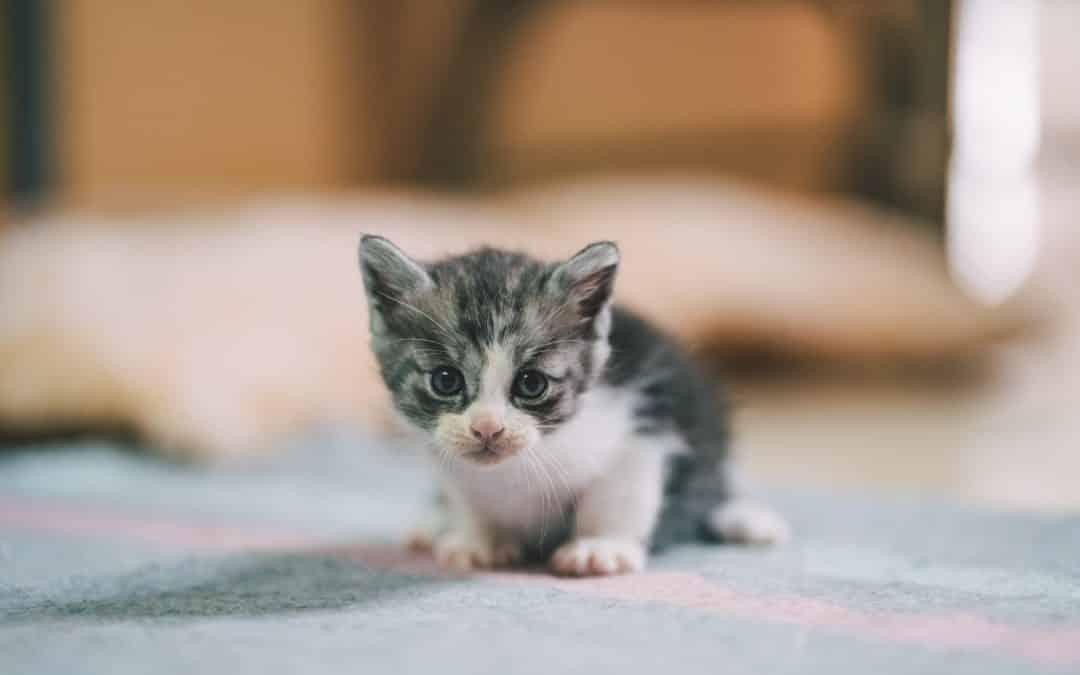 J'adopte un chaton !